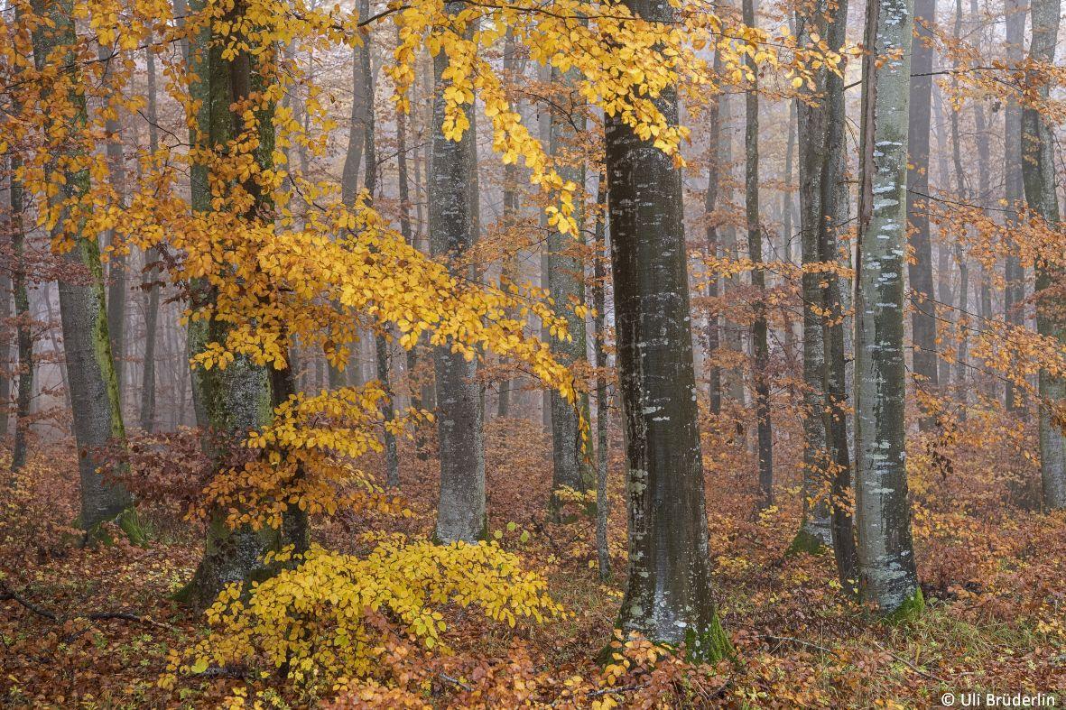 landschaften_083.jpg