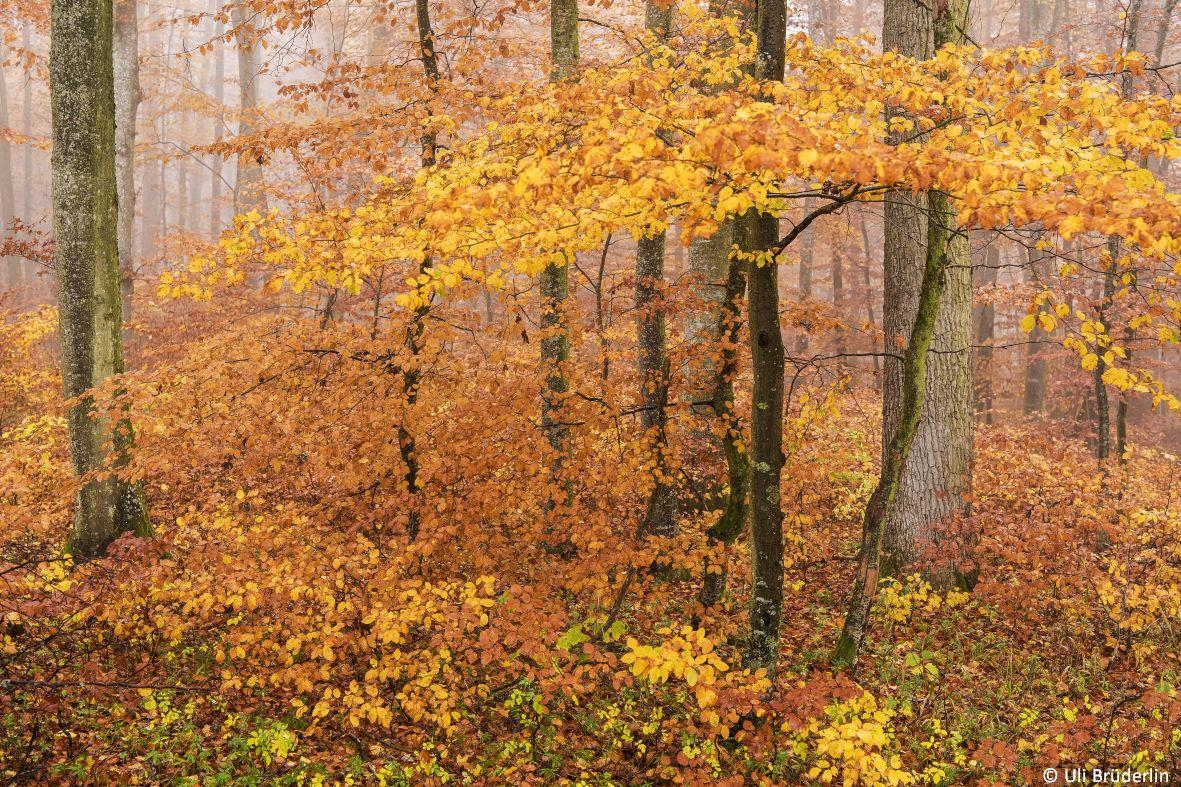 landschaften_085.jpg