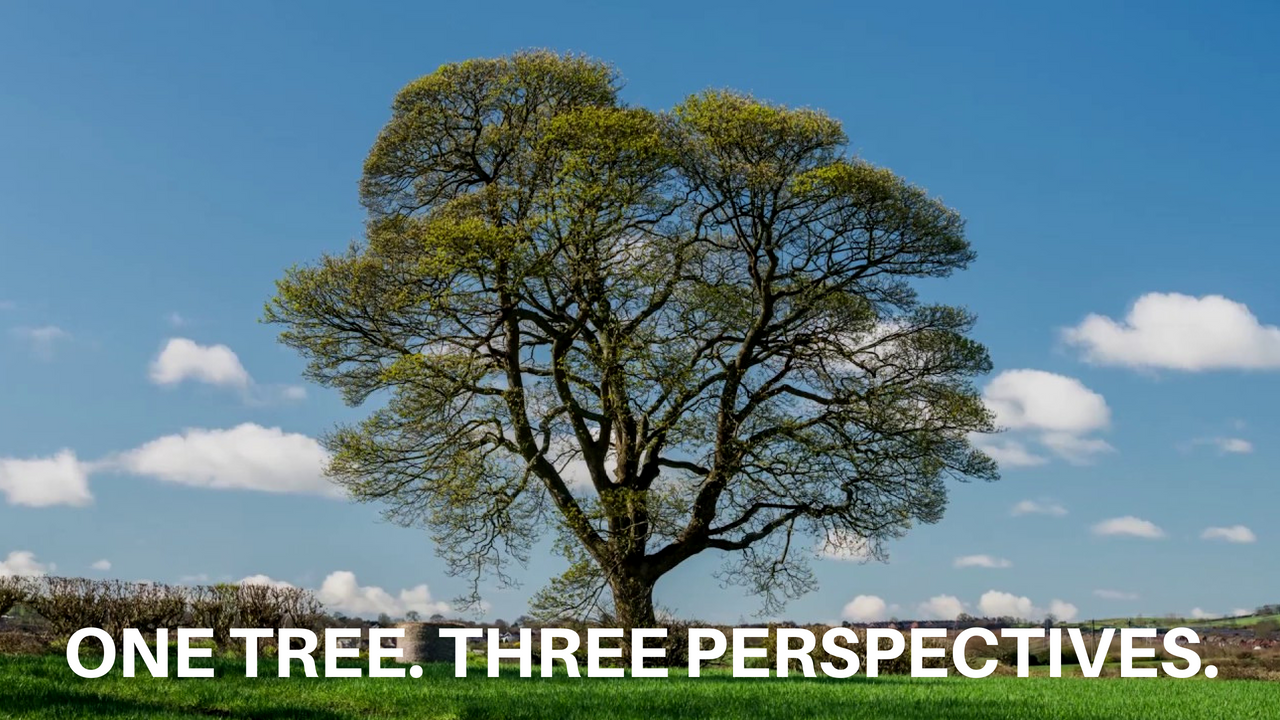 ONE TREE. THREE PERSPECTIVES..png