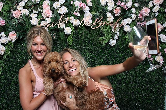 We love it when puppies #getpixilated!  #pixilated #photoexperience #photoboothrental #wedding #eventphotobooth #eventplanner #coolbackdrops