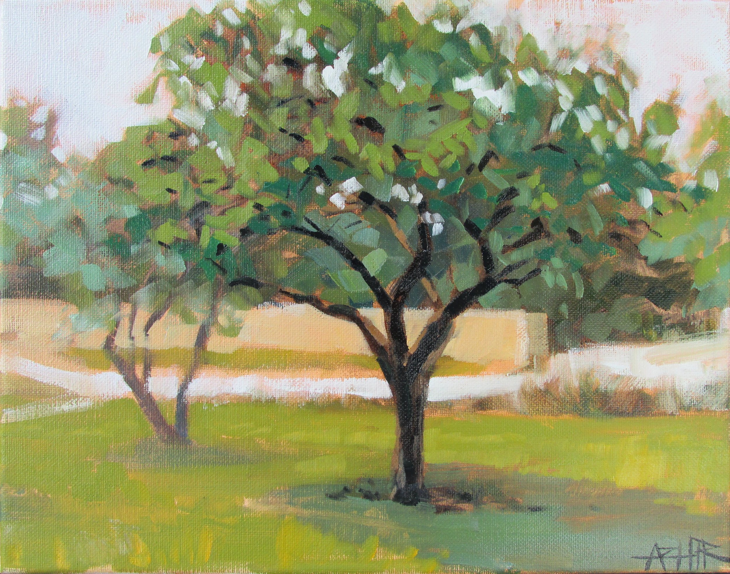 """SOLD, Tree at the Art Center, Copyright 2016, Oil on Canvas, 11"""" x 14"""""""