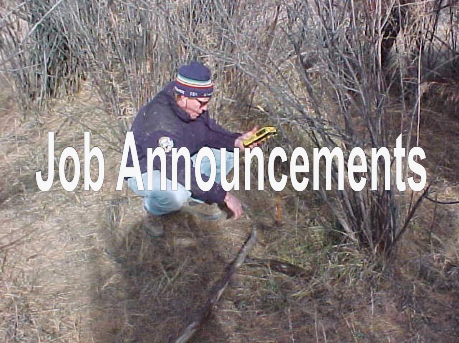 David Graf, Water Resource Specialist, surveying a grove of tamarisks -   Dave Graf, Colorado Parks and Wildlife