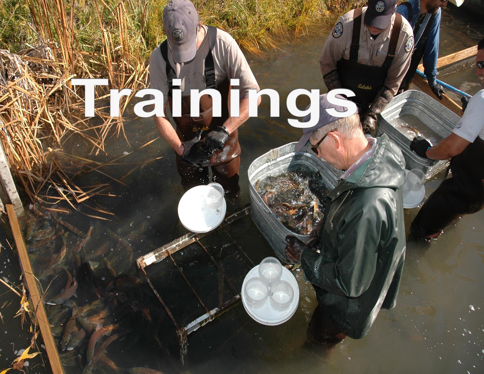Salmon Spawing,Workers spawn kokanee salmon, Joe Lewandowski, Colorado Parks and Wildlife, 10/15/2006