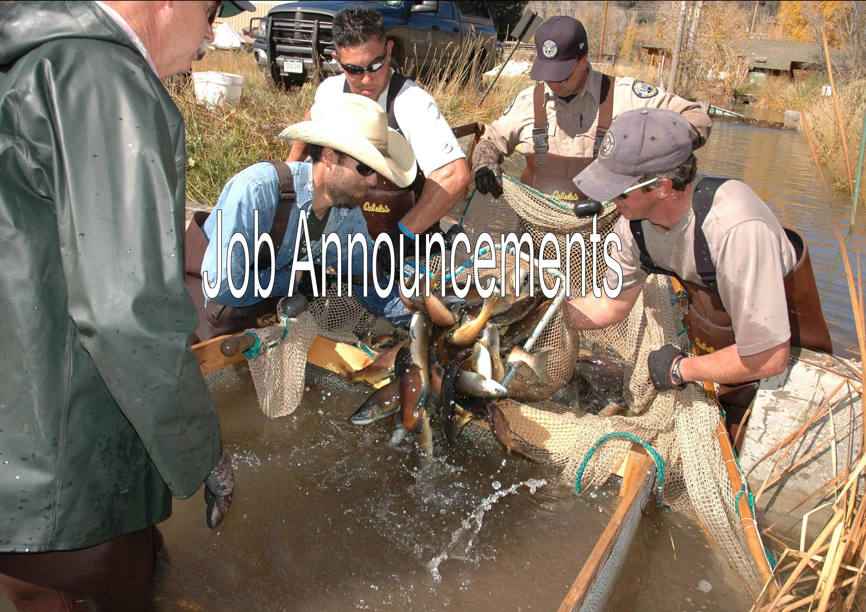Kokanee Spawning Work at Dolores River SWA, Division of Wildlife, Joe Lewandowski, Colorado Parks and Wildlife, 10/15/2009