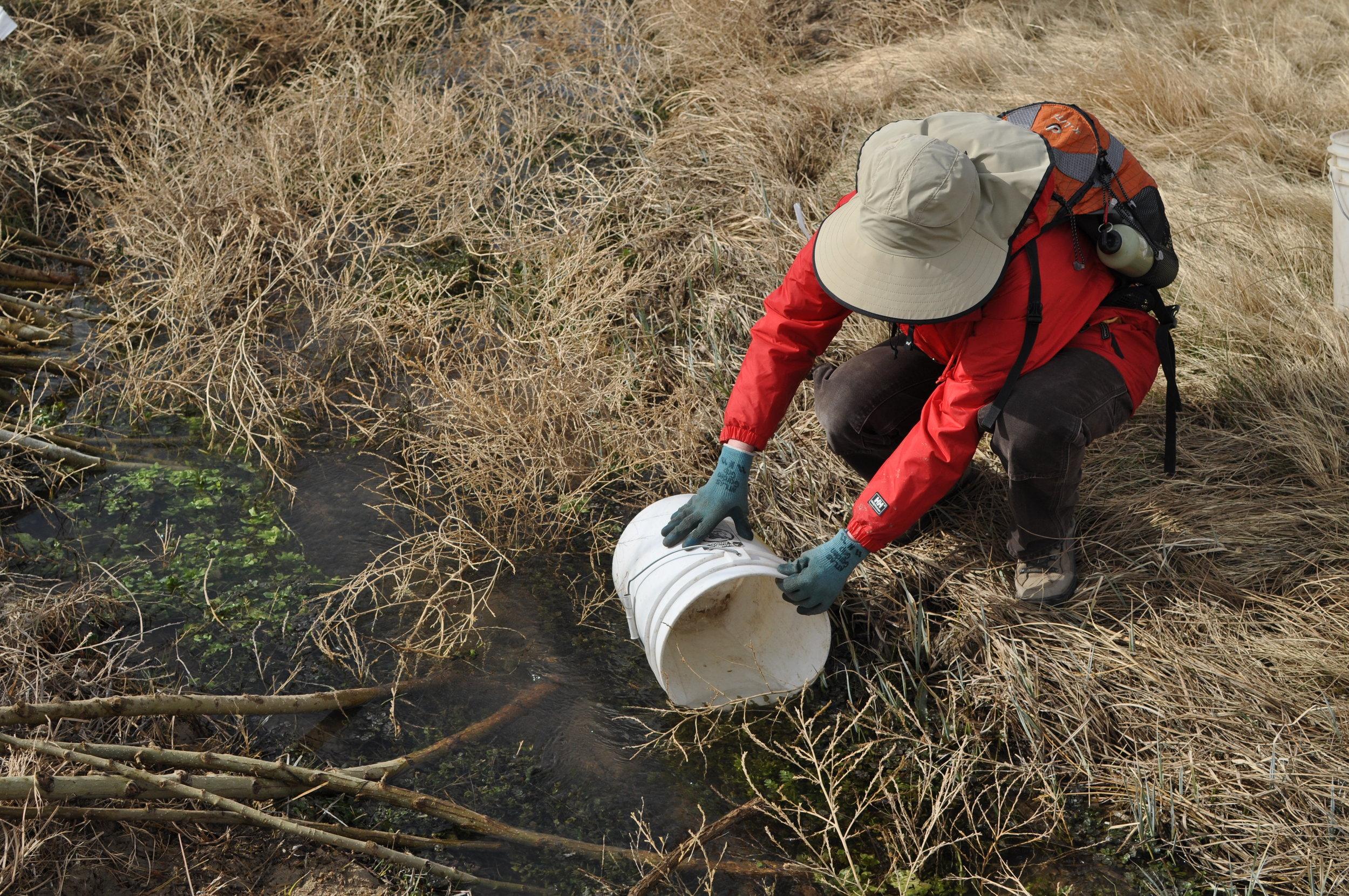 Photo Courtesy  Wildlands Restoration Volunteers