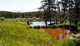 Sugarloaf Wetlands 1.jpg