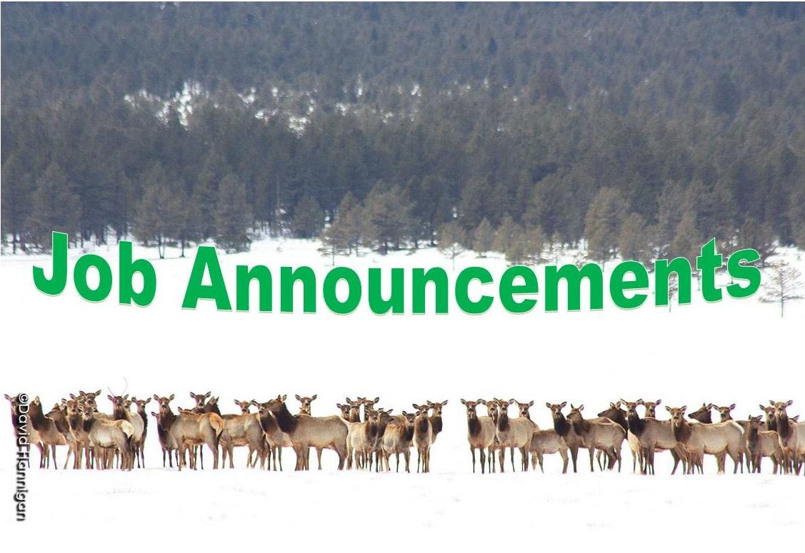 Buena Vista Elk Herd 4_web.jpg