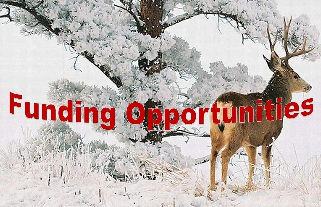 Buck deer in winter. Division of Wildlife. David Hannigan. Photos taken: 1/25/2009