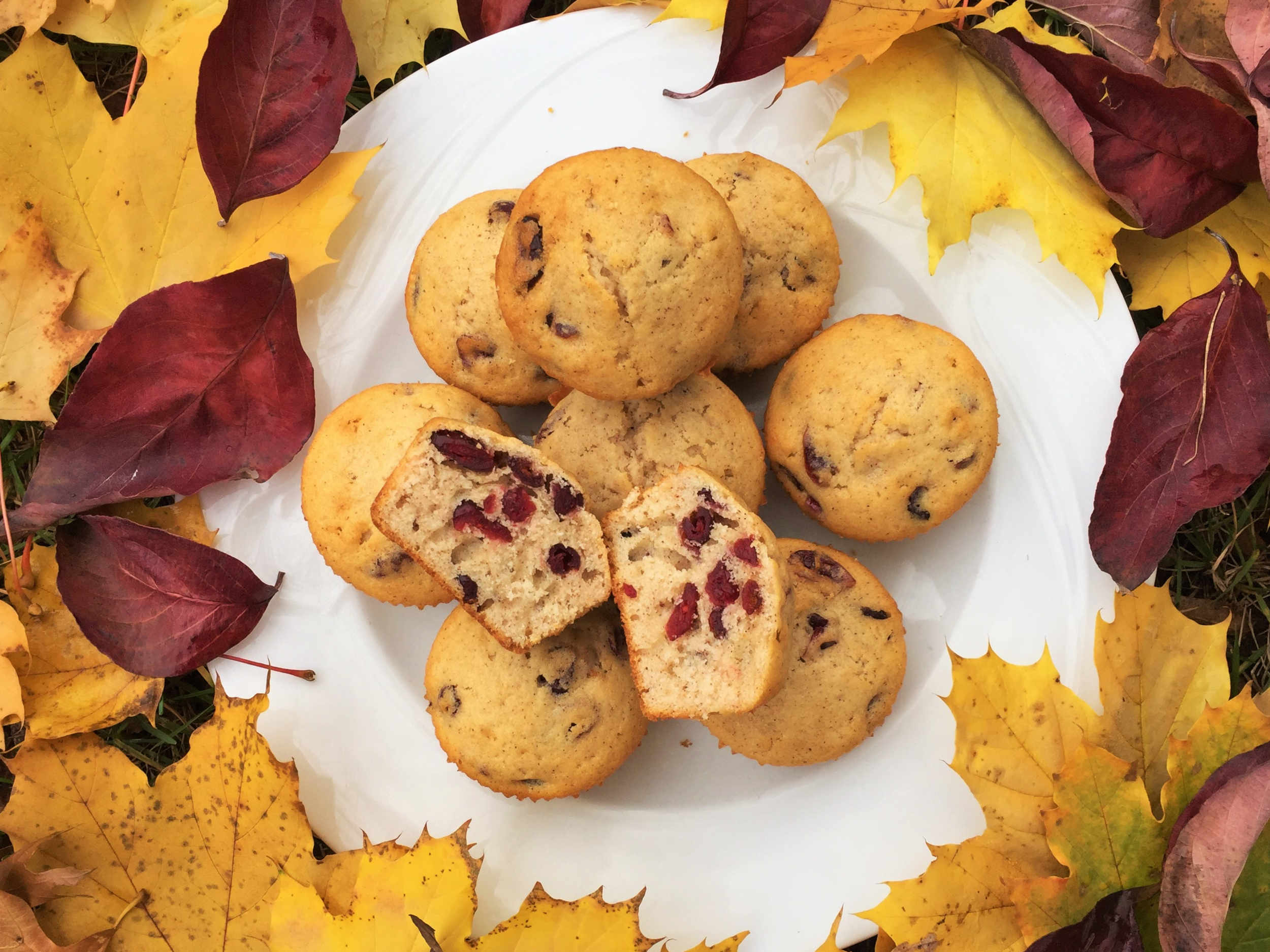Cinnamon-Cranberry Muffins made in the Adventure Kitchen in November 2015