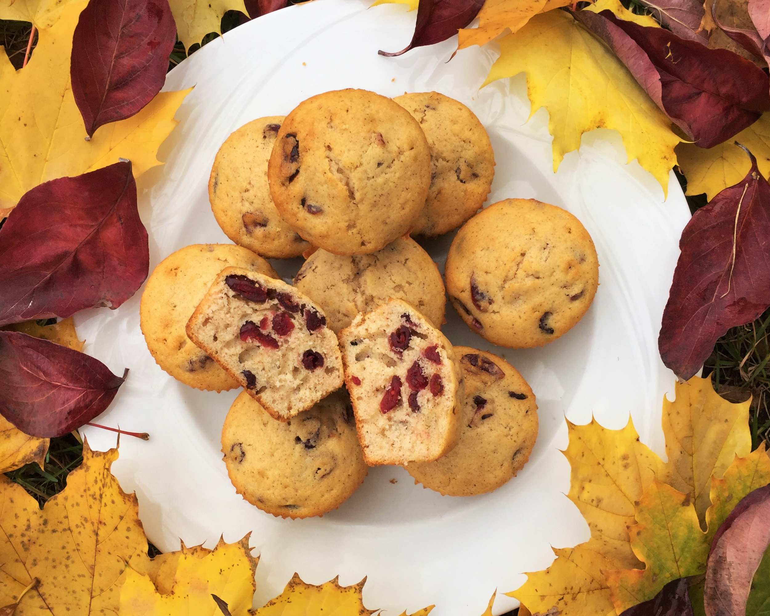 Cinnamon-Cranberry Muffins  made in the Adventure Kitchen November 2015.
