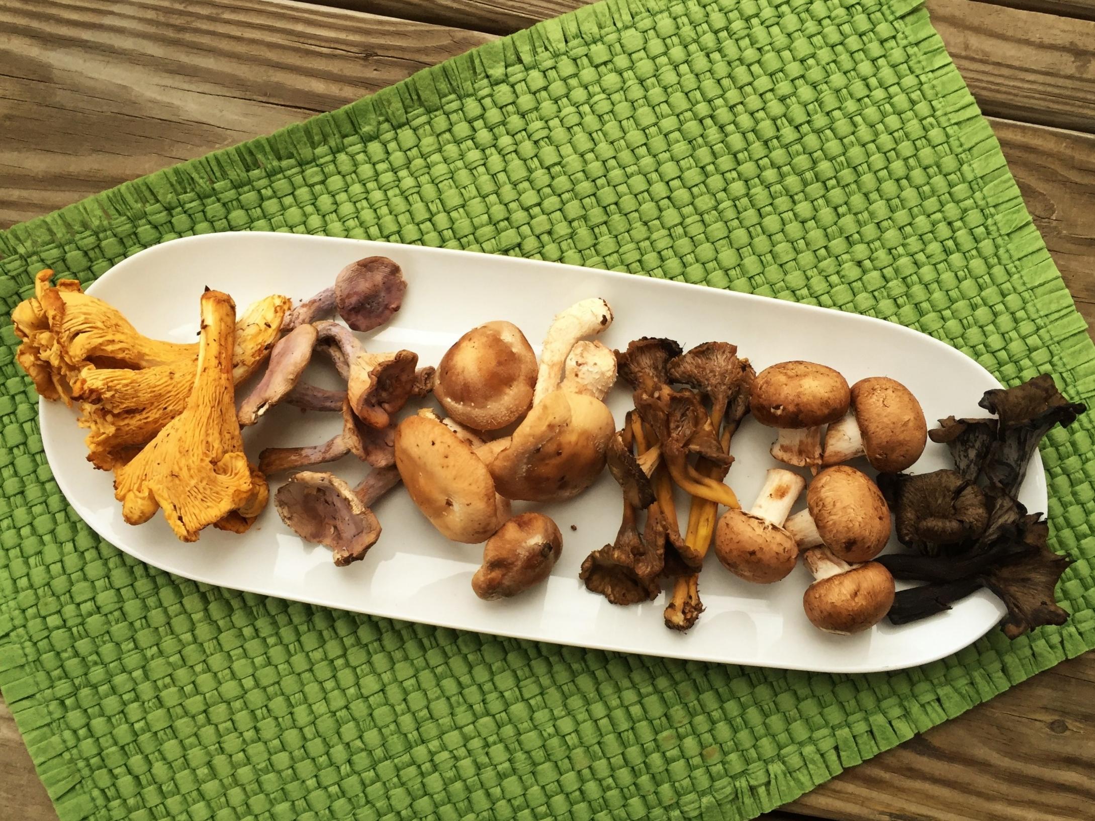 Assorted Mushrooms.jpg