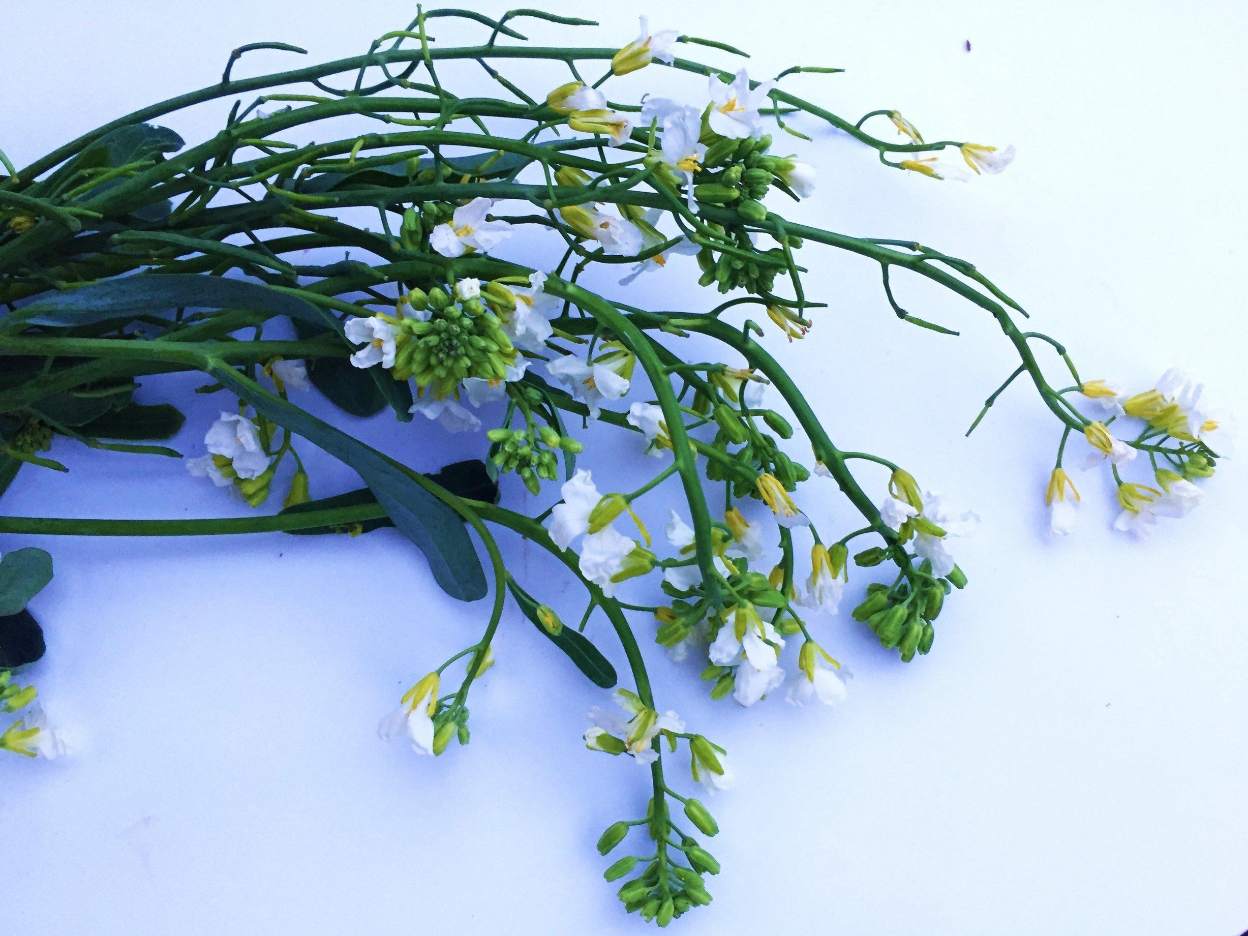 Close-up of broccoli blossoms.