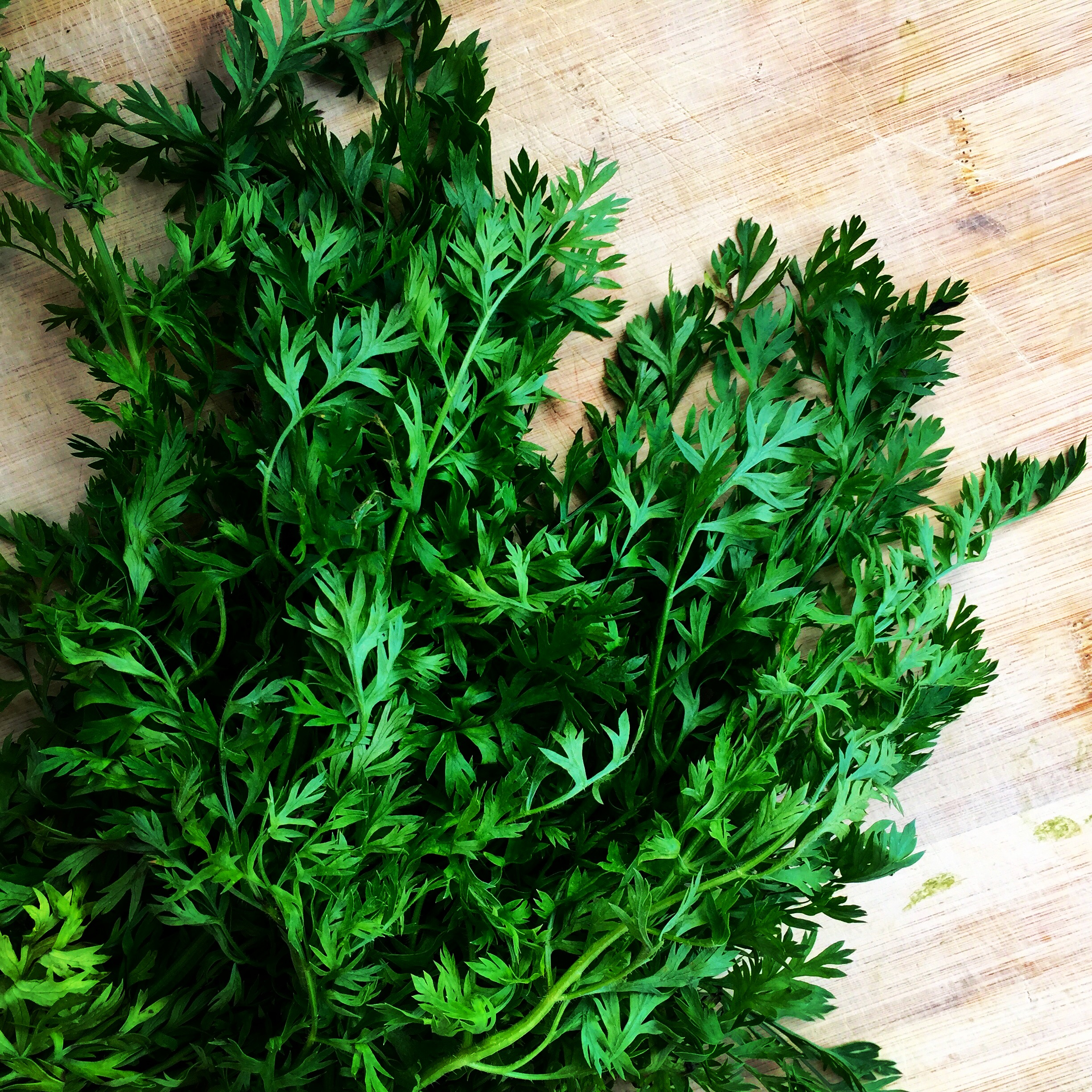 Carrot tops, ready to be minced up and added to dip.