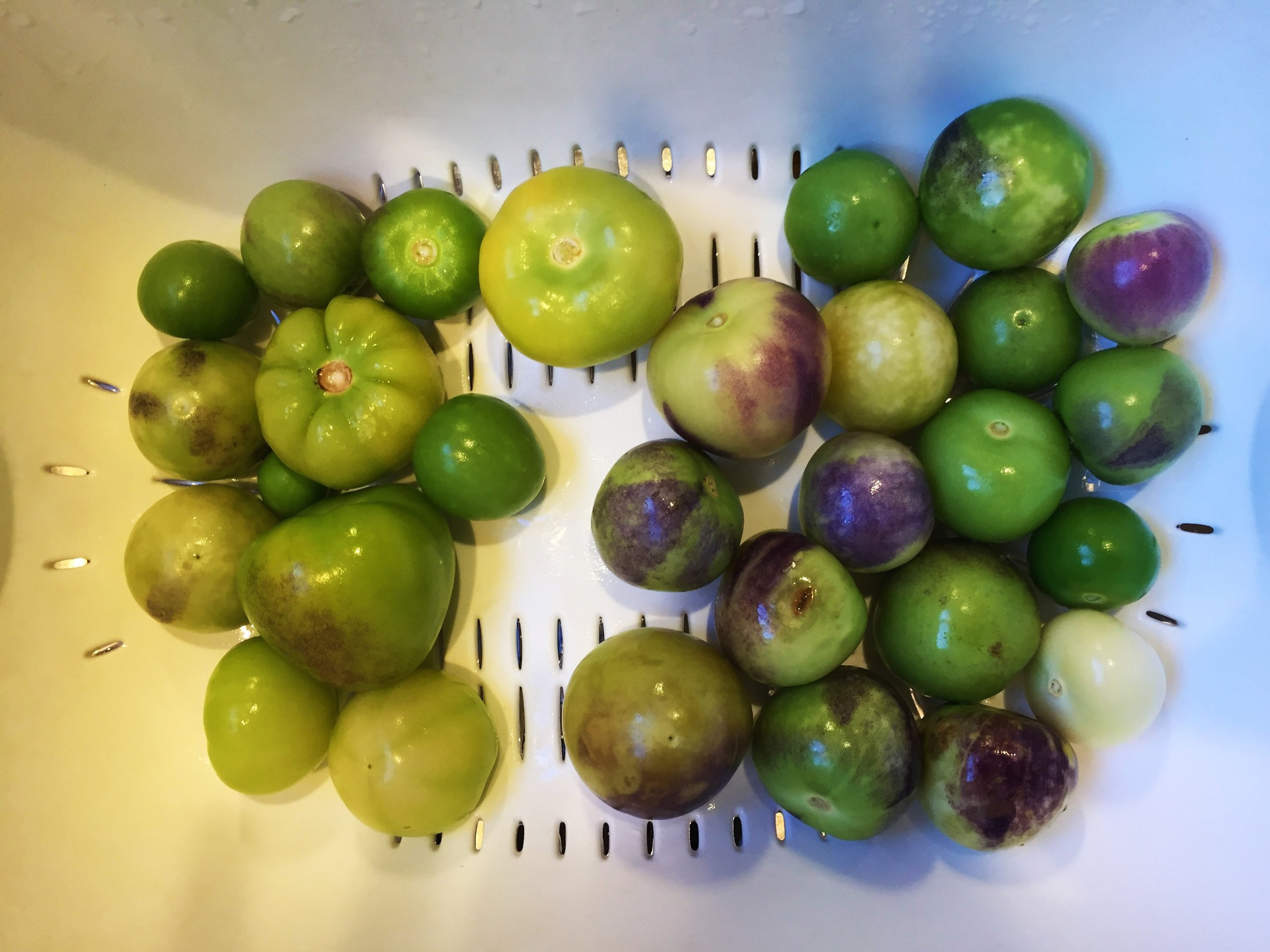 Tomatillos husked, rinsed and ready for action in the Adventure Kitchen.