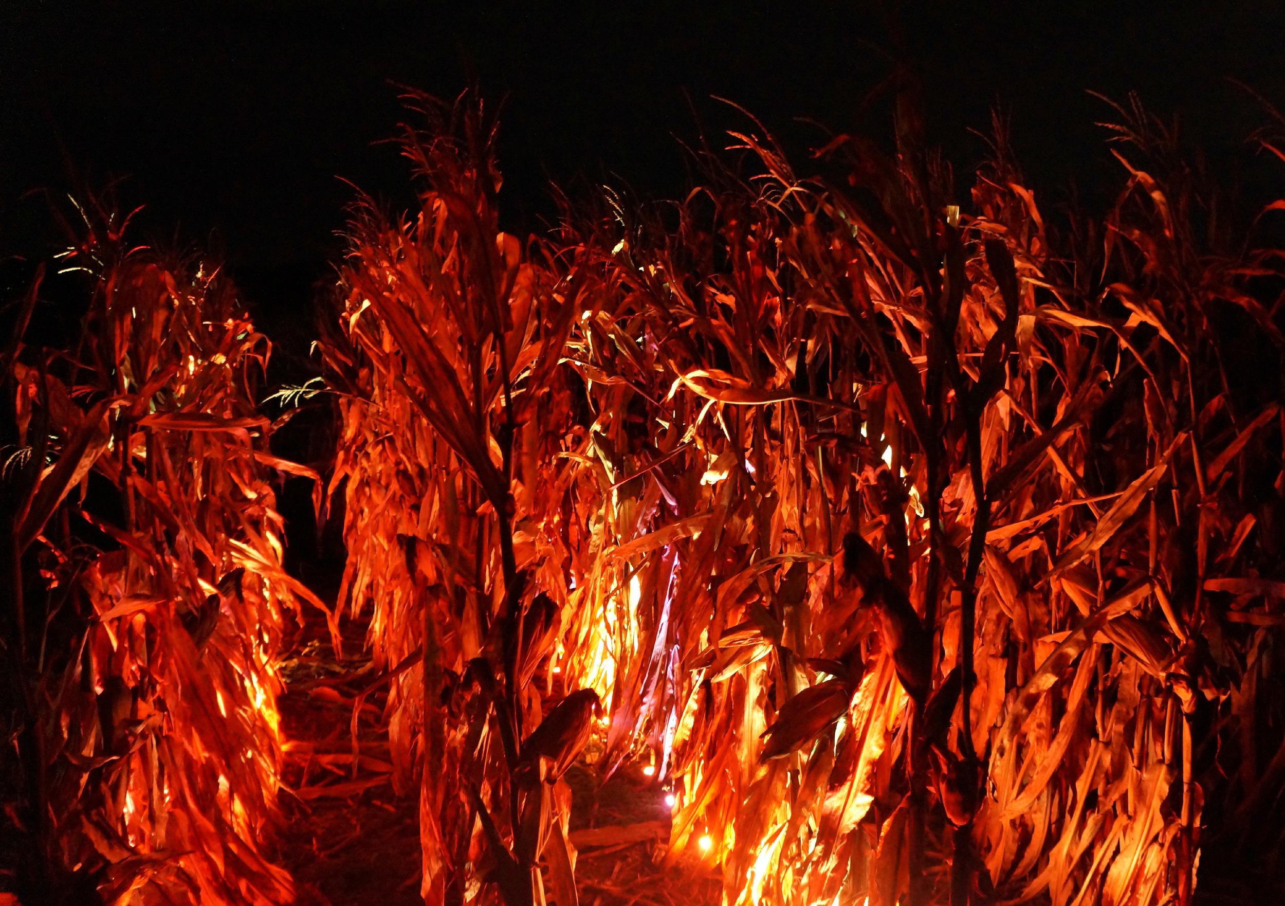 Cornfield on Fire.jpg