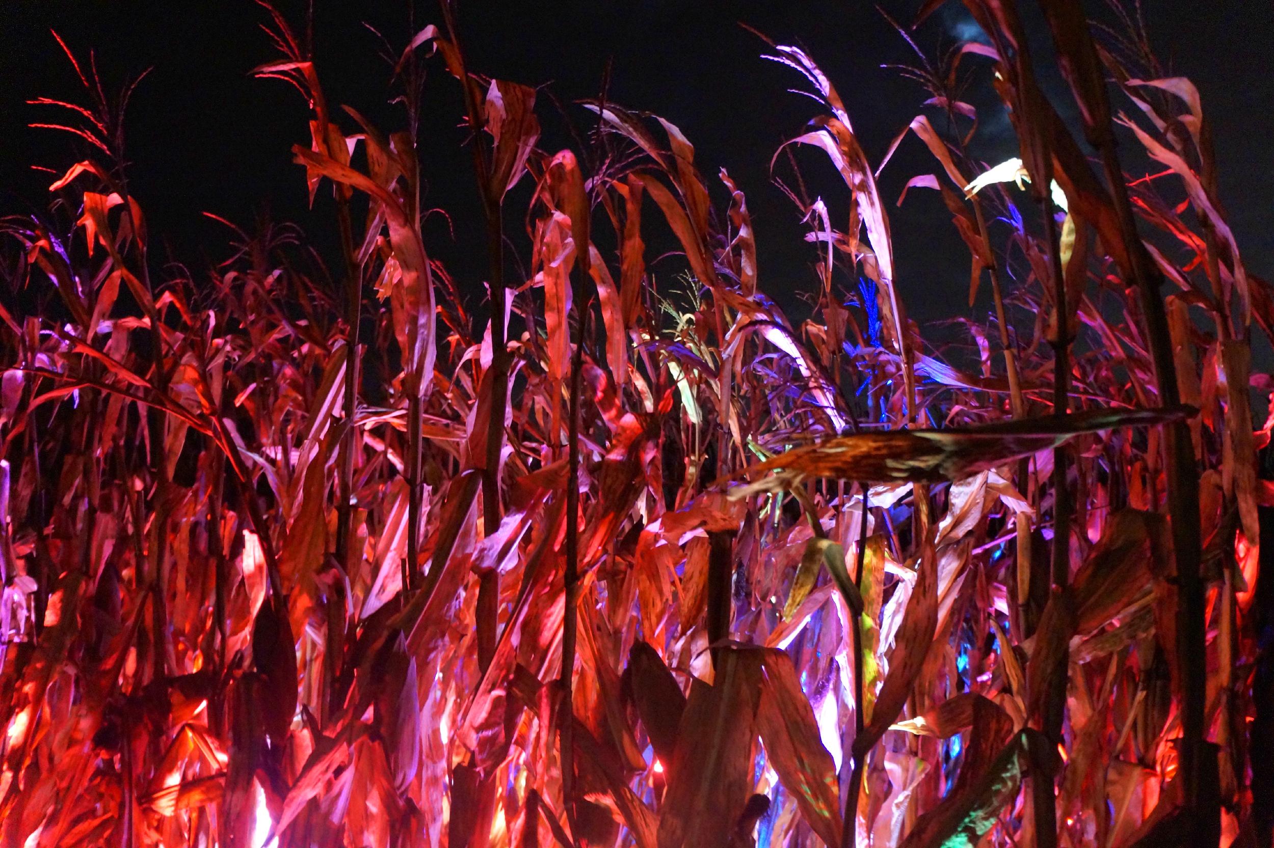 In the Corn 2.jpg