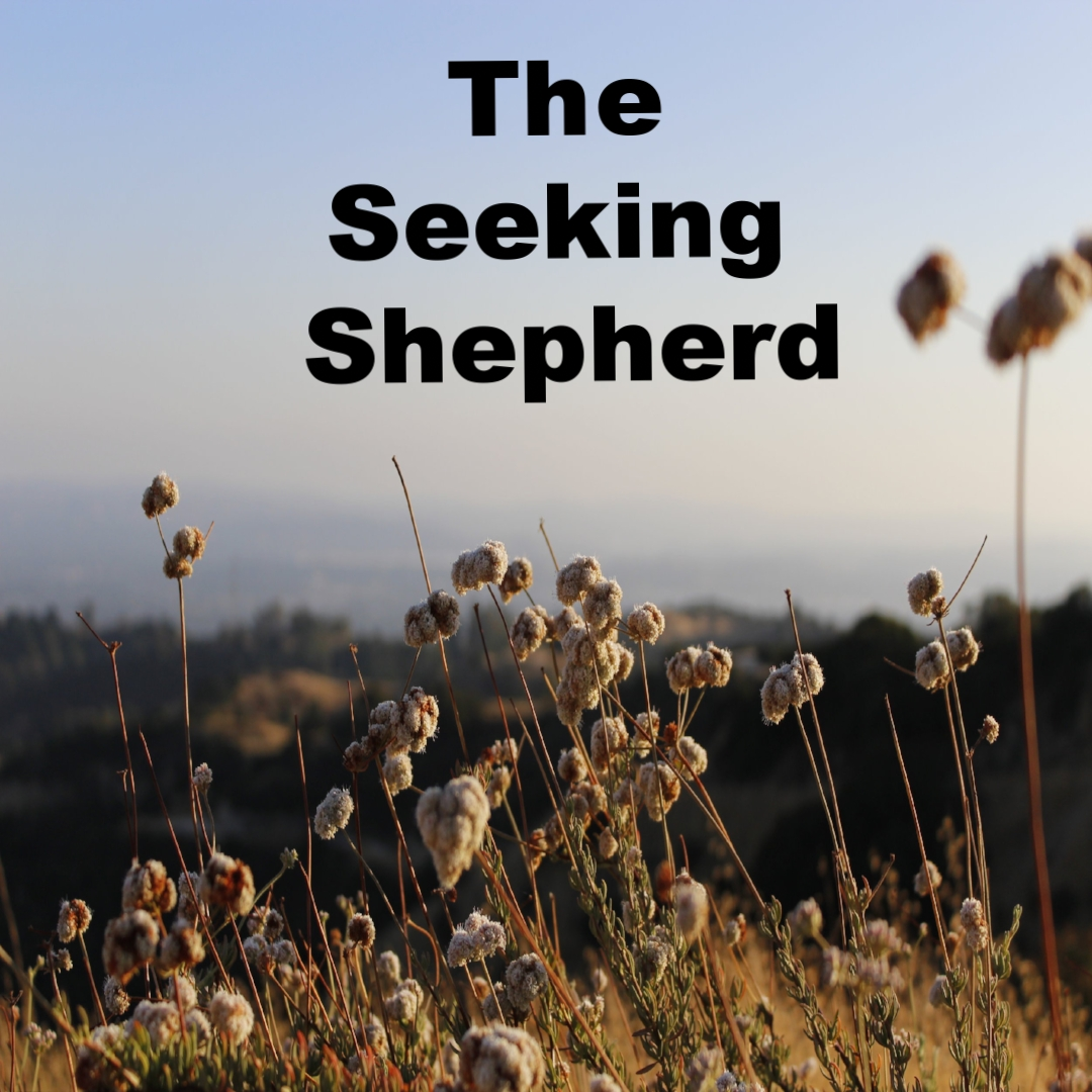 The Seeking Shepherd 11/06/17