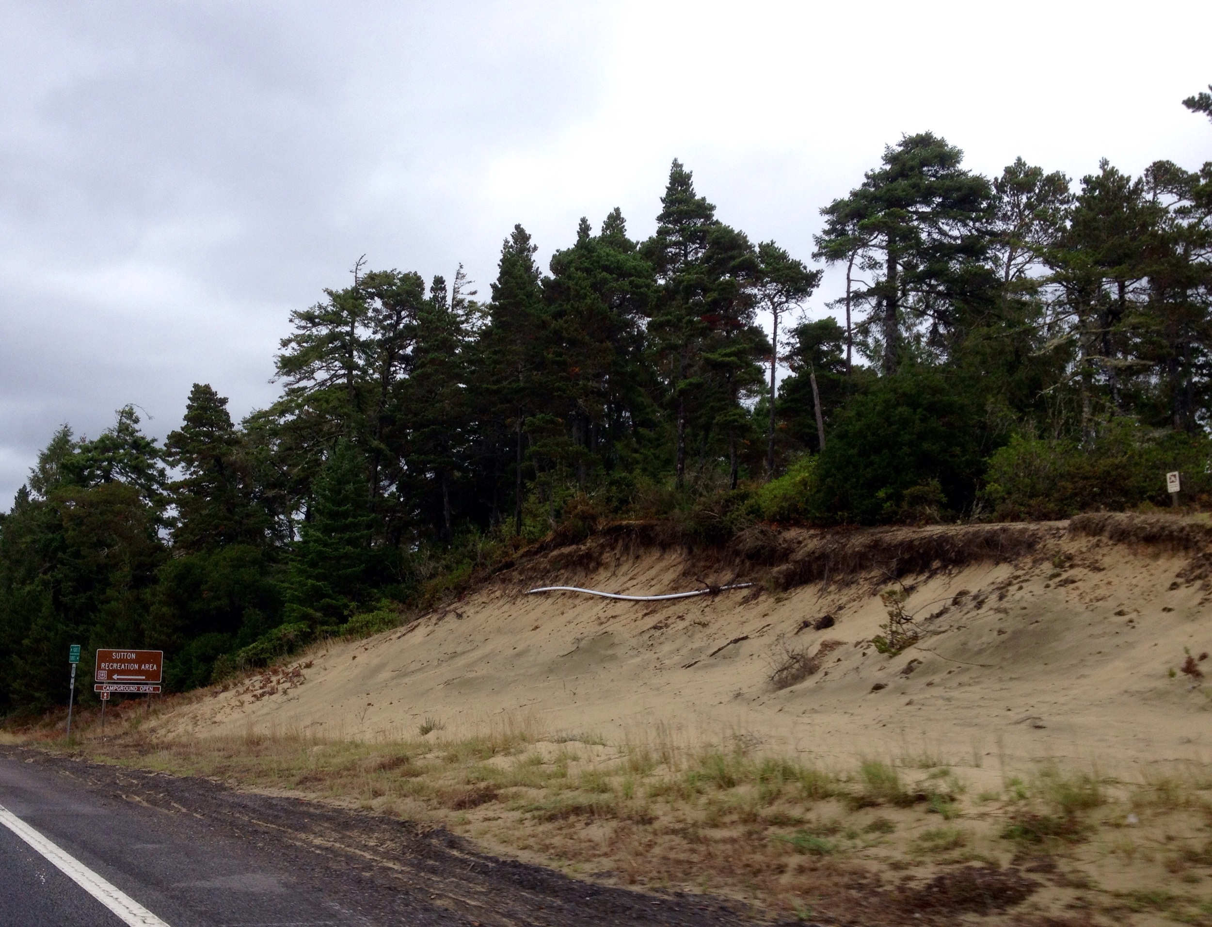Sand Dunes Pines