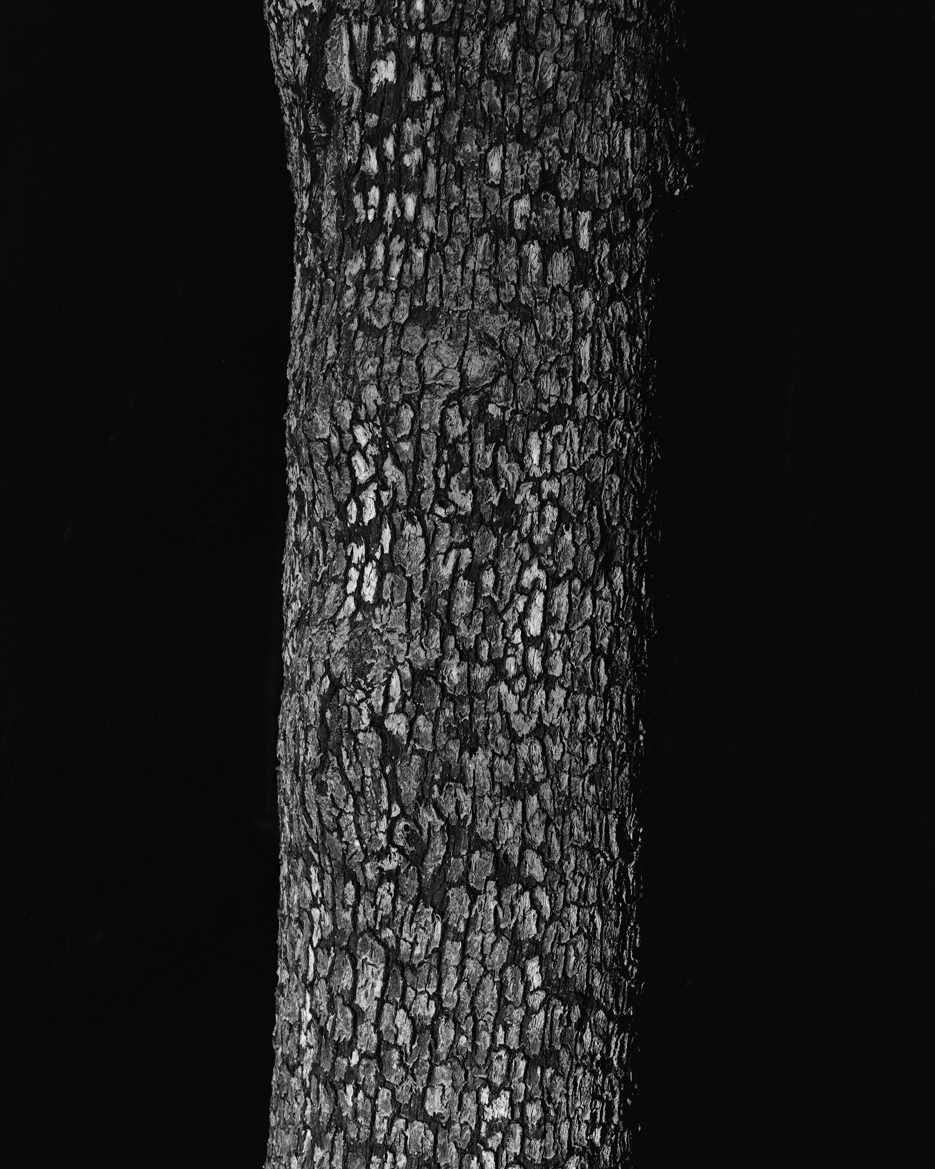 Fire_Tree_closeup_Print_16x20.jpg