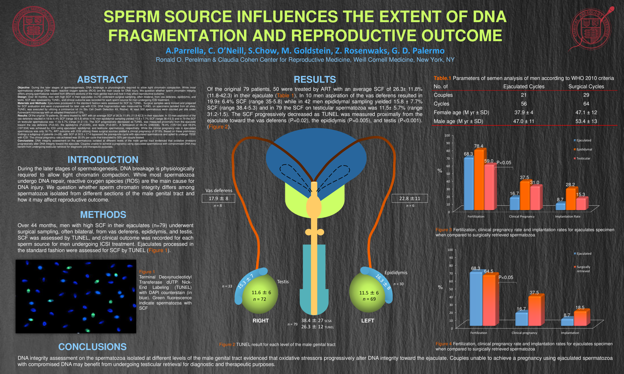 Sperm-Source-Influences-the-Extent-of-DNA-Fragmentation-and-Shapes-Reproductive-Outcome.png