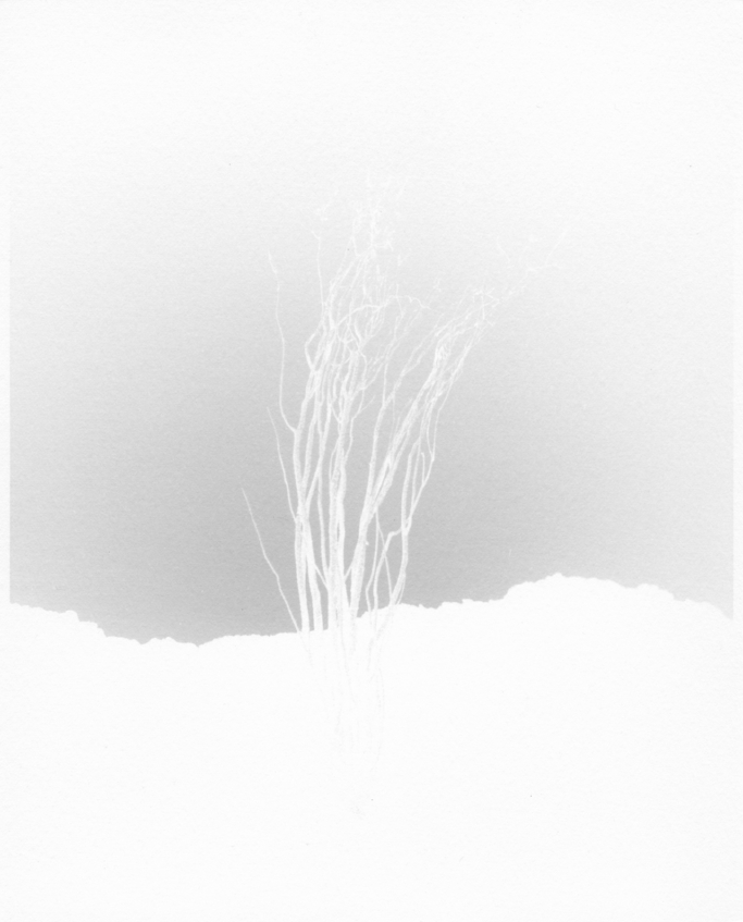 "scott b davis  ocotillo, ocotillo (no. 8),  2015 8""x10"" unique platinum paper negative signed in pencil on print verso"