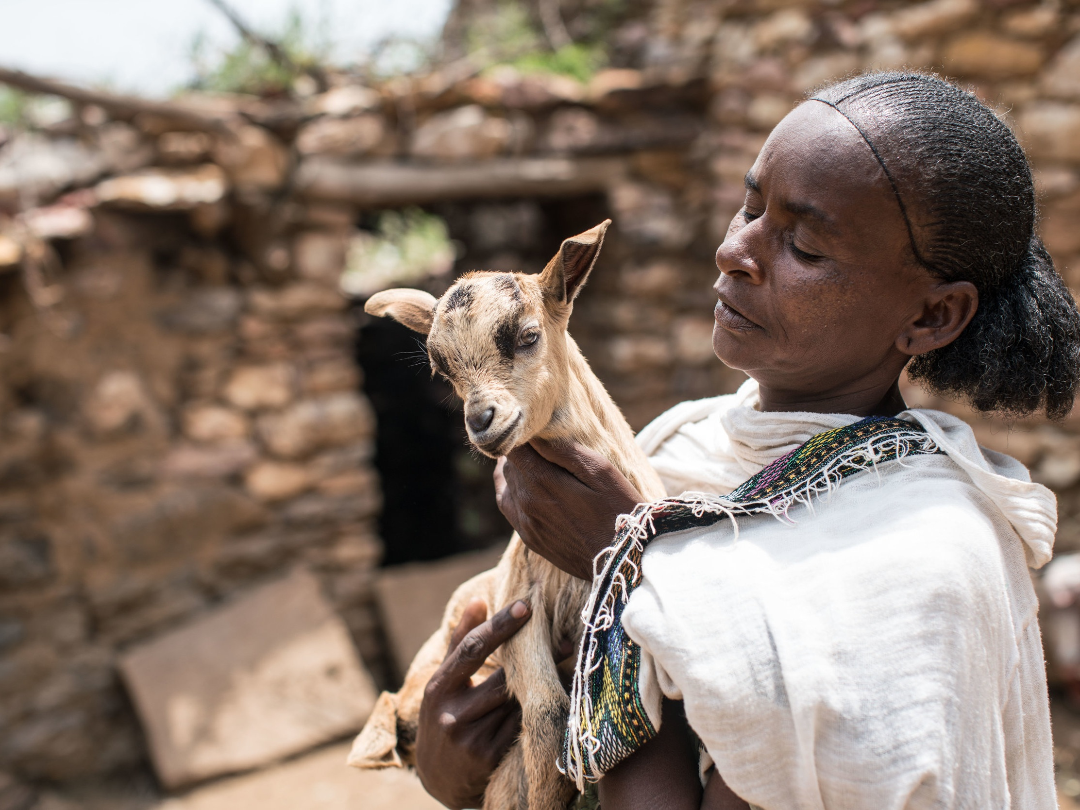 This is Mebrehit Mebrahtoa, a mother of eight from the Tigray Region in Ethiopia. In 2013 Mebrehit was given three goats by Farm Africa. She has since transferred three to another woman, sold nine and increased her herd to 17 goats which provide income for her family.