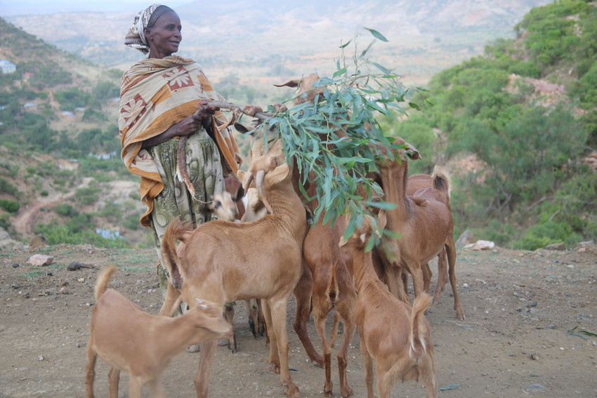 RS11918_mebrhat with goat 7-scr.JPG