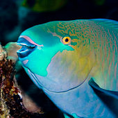 Parrotfish:  Look at that smile. Who wouldn't want this dude on their business card? I want to call him right now!