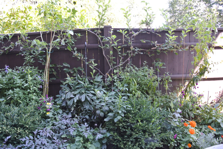 John de Lellis Gardens 52.jpg
