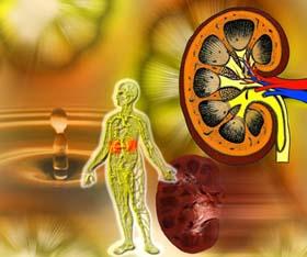 kidneys.jpg