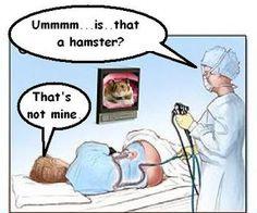 Colonoscopy+Hamster.jpg
