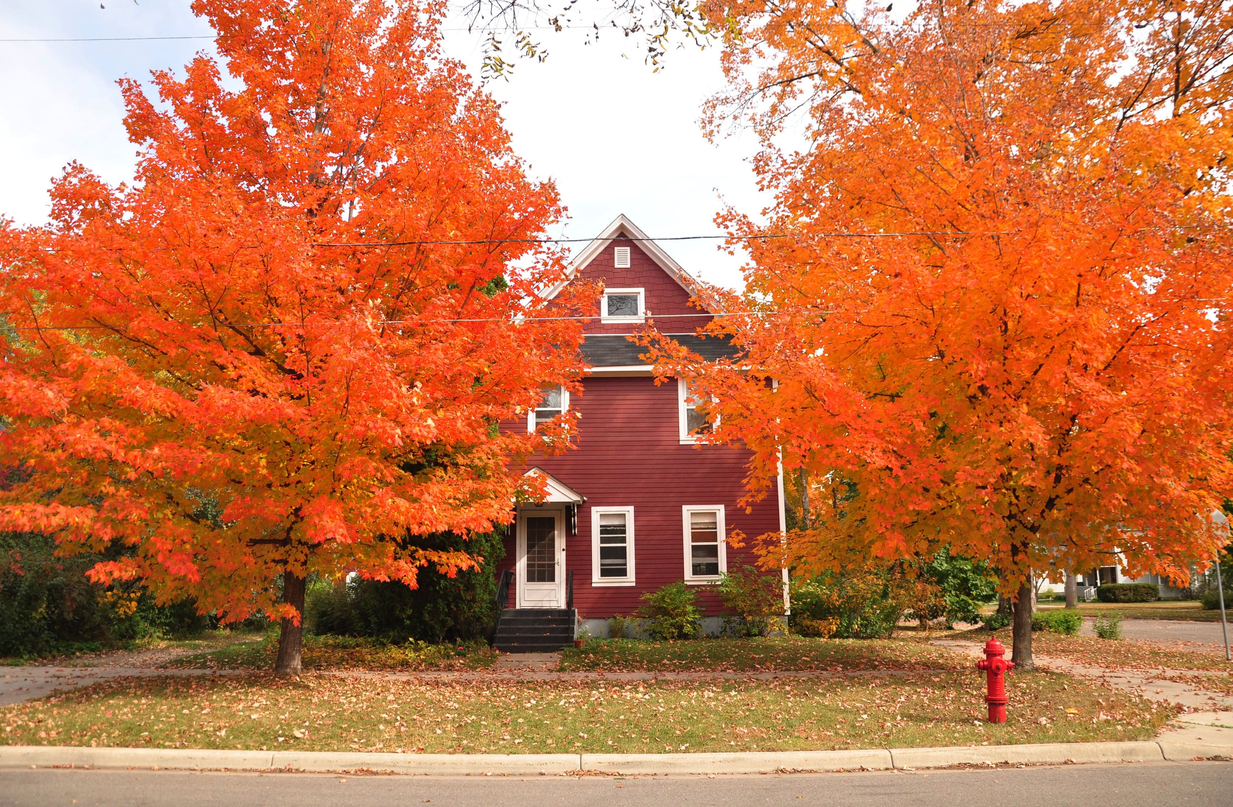 fall leaves 056.JPG