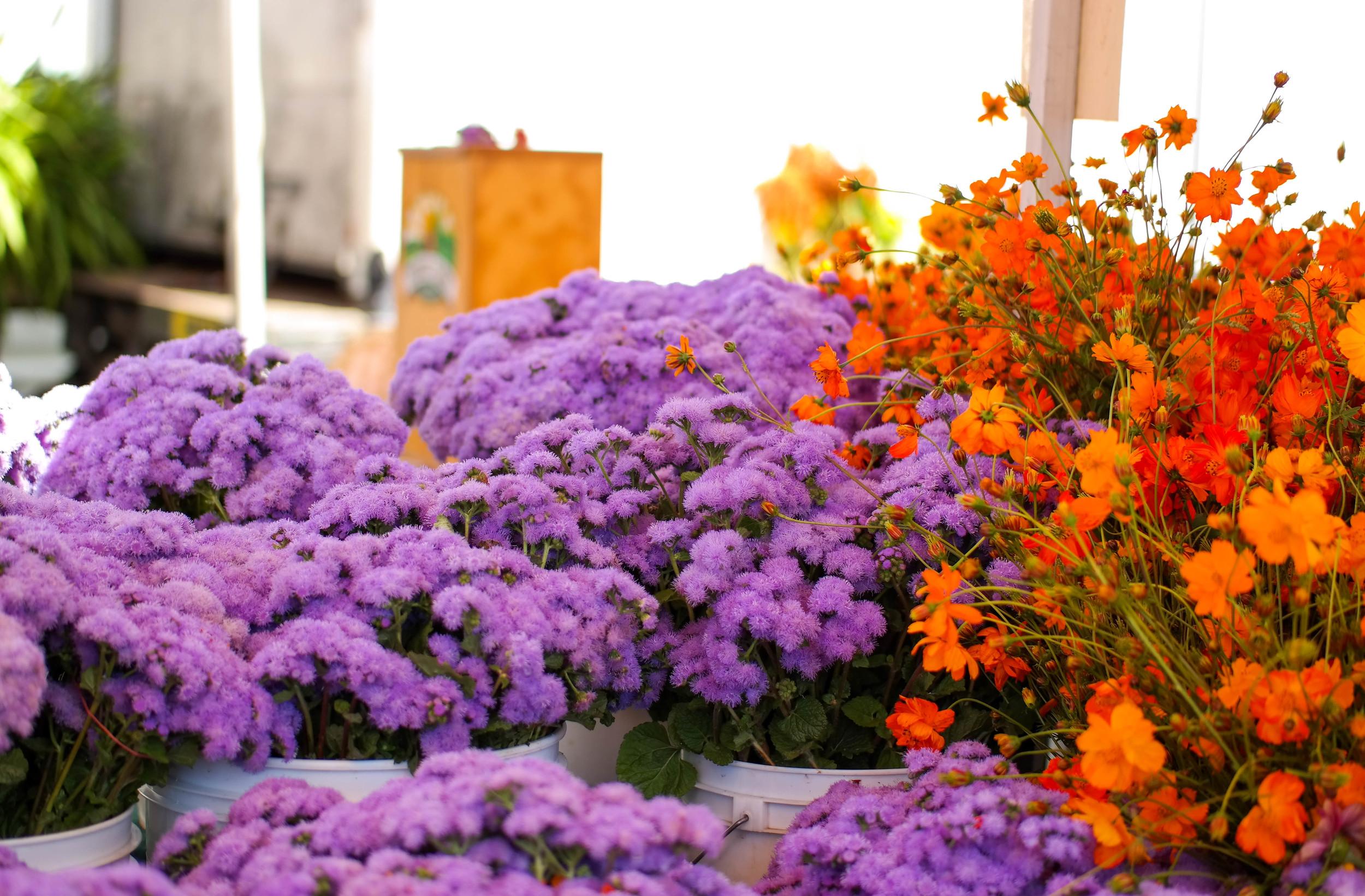 4-Orange-and-Fennel-Salad | www.8thandlake.com