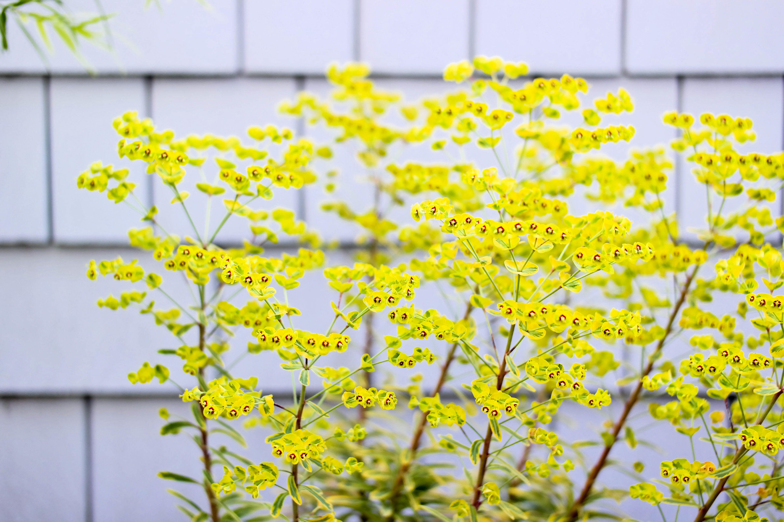 2-Spring-Pasta | www.8thandlake.com