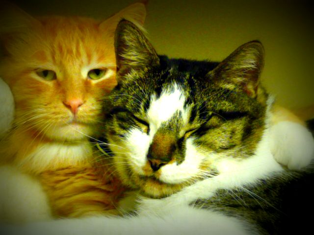Ernie and Mogwi come to stay for a weekend (the vet clinic cats)