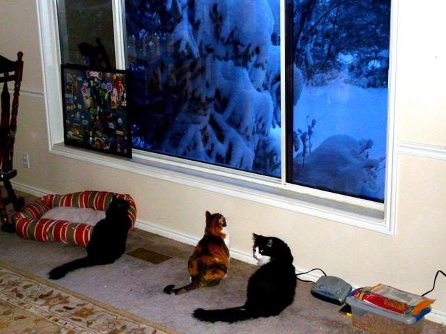 Watching snow fall...