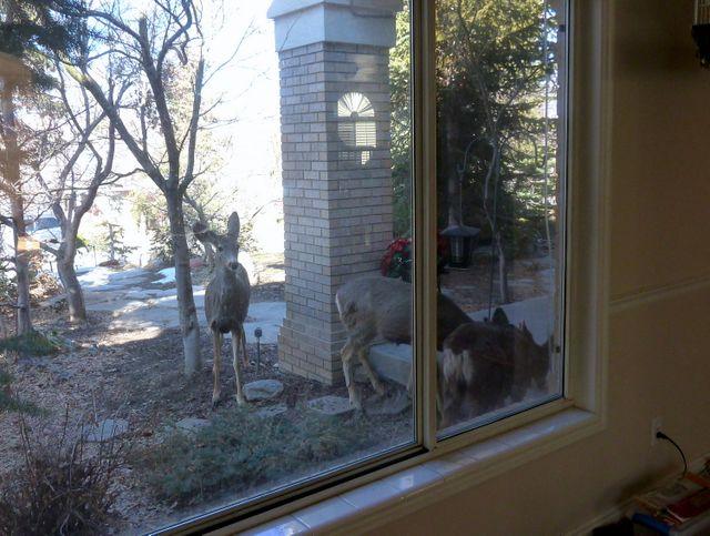 Back at the bird feeder...