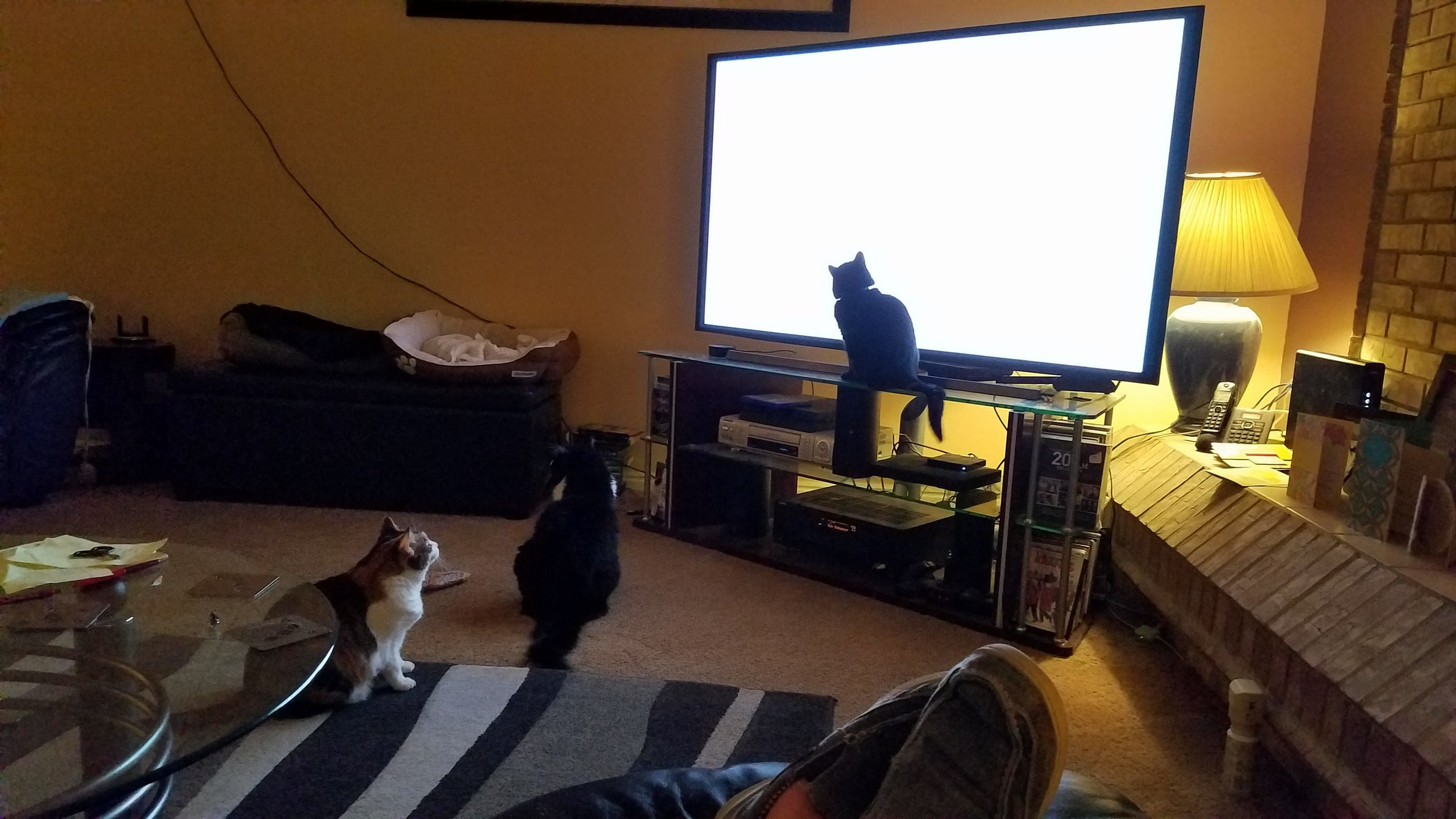 The cats decided they like TV