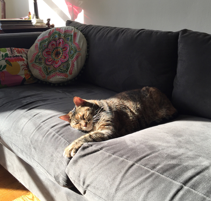 Allyn_Howard_Lena-cat_sofa.jpg