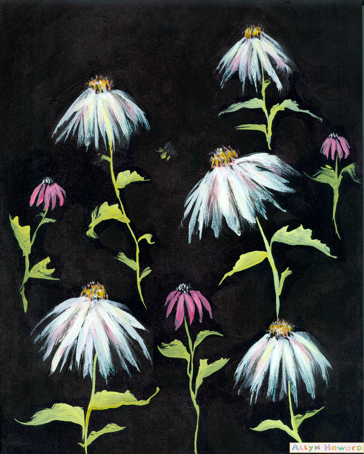 Allyn_Howard_white-wildflowers_daisies.jpg