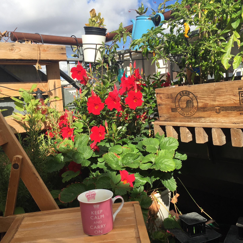 2018-08-21 Cpnhgn-roof-deck_morn_Vesterbro.jpg