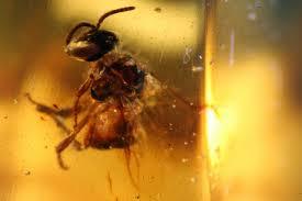 Miel ecológica sovoral.jpg
