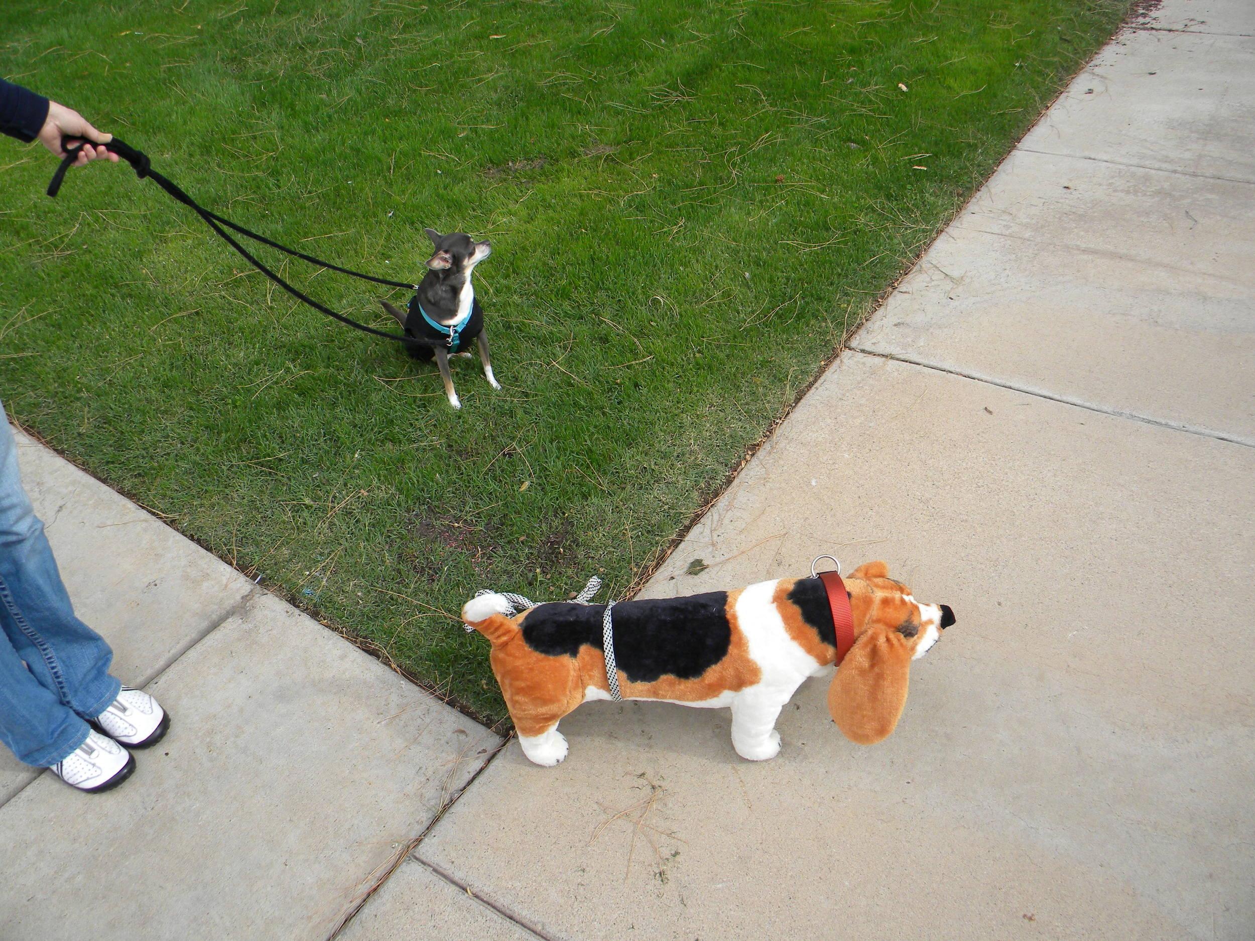 Meeting neutral dog (2).jpg