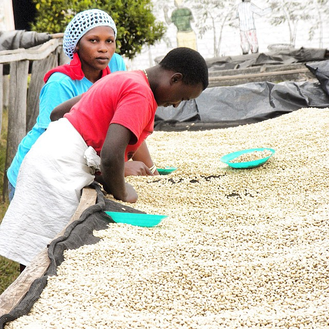 Open Hands supports coffee farmers and coffee cooperatives in Rwanda through various projects encouraging sustainable farming methods.  #supportingfarmers #nonprofit #sustainableprojects #familyfocused #rwandancoffee #internationaldevelopment #openhands