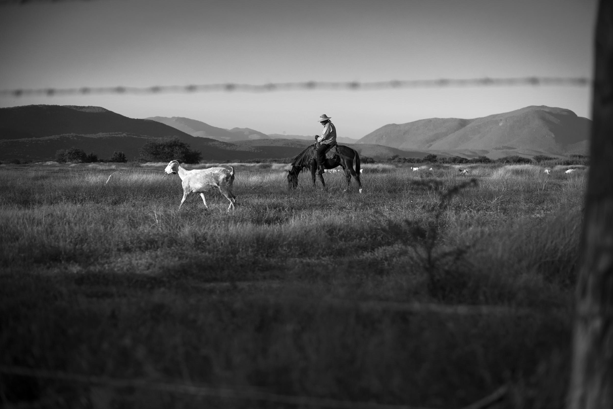 A farmer in Cocula, Mexico. December 5, 2014.