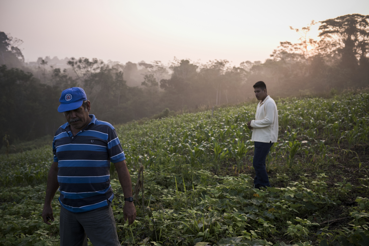EL PIRU, MEXICO- January 28: Ascención Hernández Carbajal works in his fields with his son Ernesto on January 28, 2017 in El Piru, Mexico. Choncho, as he's known, has contributed 30 hectares of pristine rainforest to the commiunity's conservation and eco-tourism .(Jonathan Levinson for Mongabay)