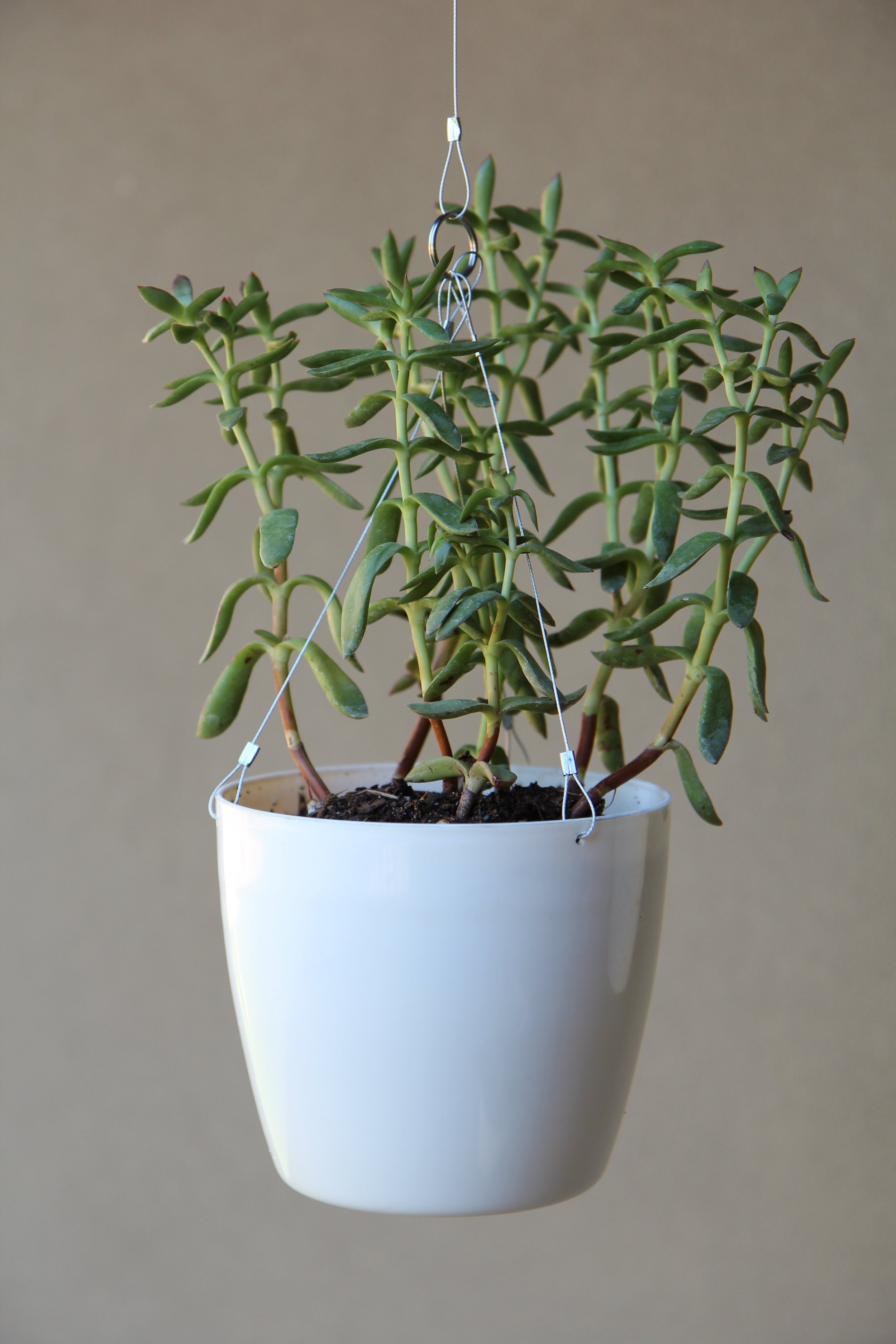 Single White Planter 3.jpg