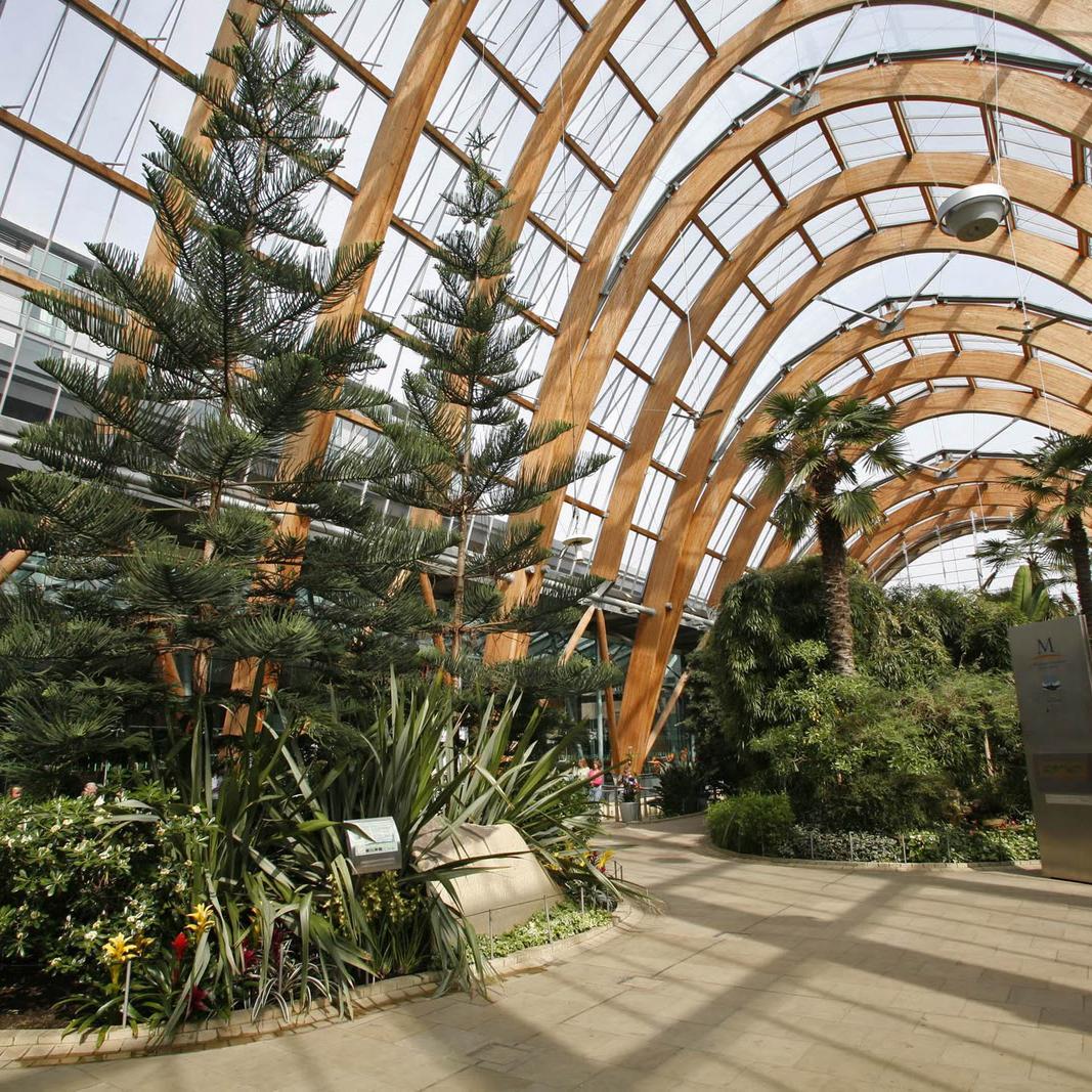 Sheffield Winter Gardens