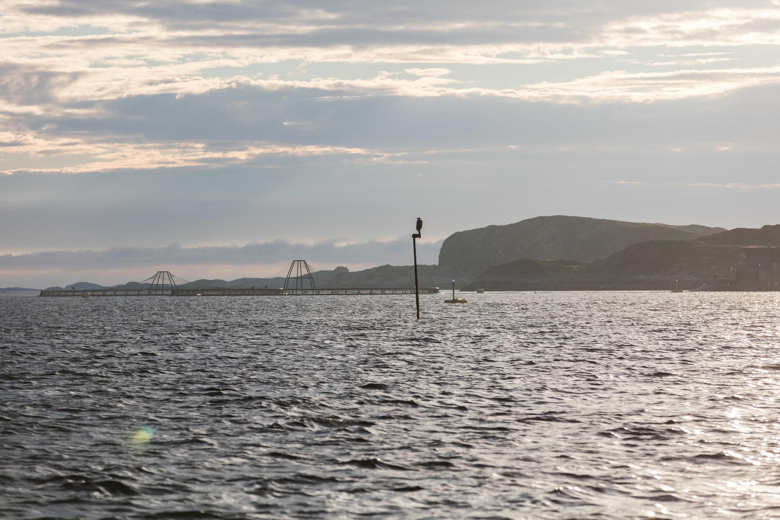 Ørn-Hitra-Norge-norway-fotoknoff-sven-erik-knoff-1091.jpg