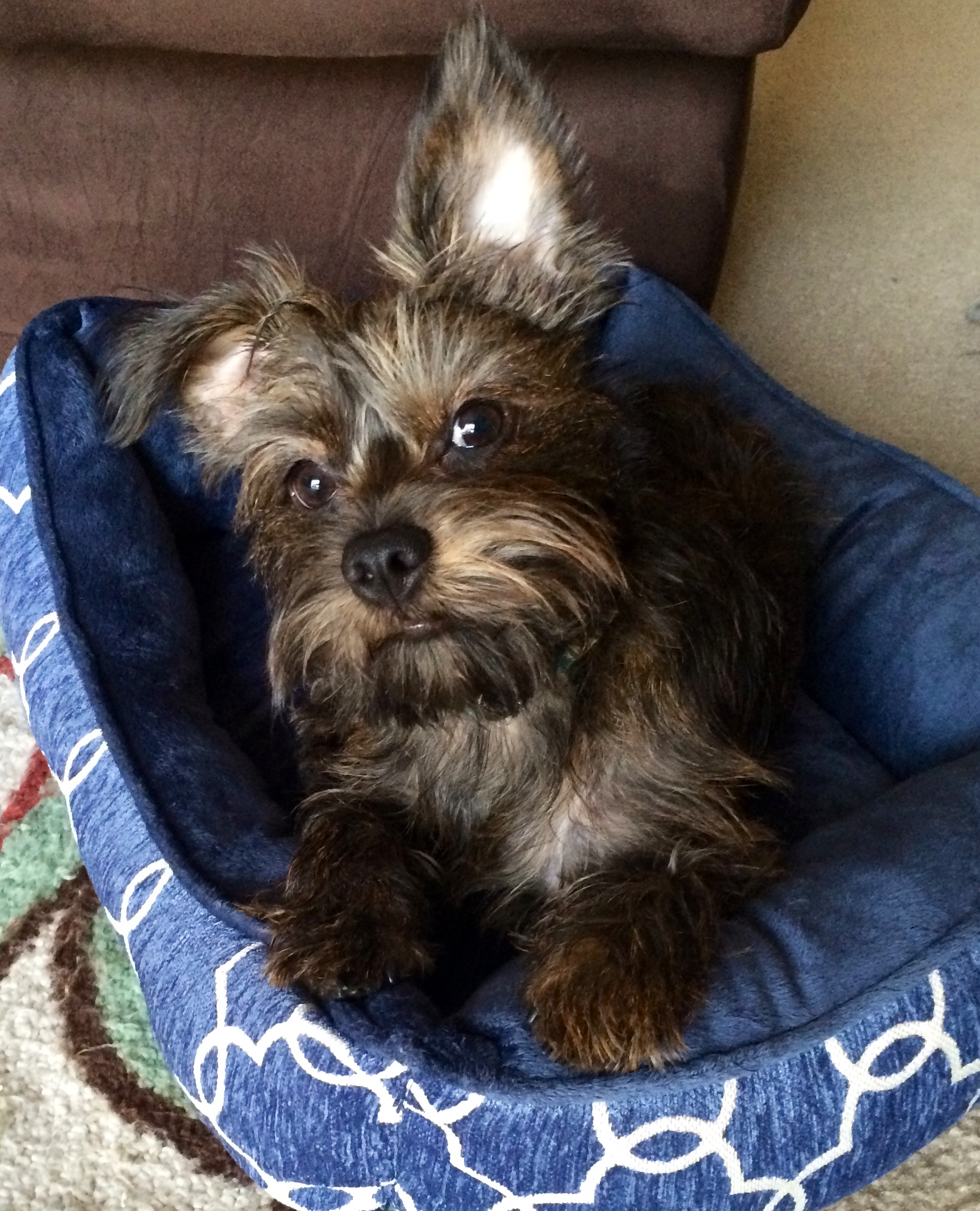 Cassie's sweet pup, Willow (told you she's the cutest).